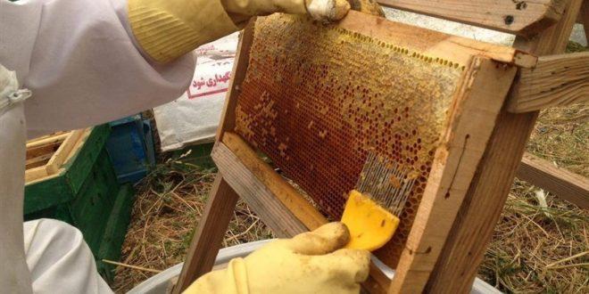 عسل طبیعی الیگودرز
